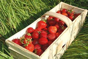 Czy polskie owoce i warzywa są pełne chemii? Warto płacić za eko? Ekspert: Jeśli miałbym wybrać: bazarek czy market, wybiorę ten drugi