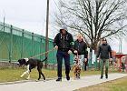 Bezdomne psy wykorzystane przez ONR. Wolontariat w rękach propagandy nacjonalistów