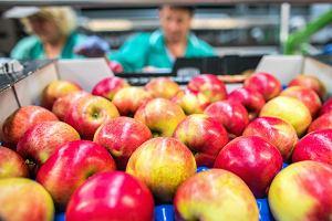 Pisemna umowa na jedną skrzynkę jabłek. Ministerstwo Rolnictwa zmieni absurdalne przepisy