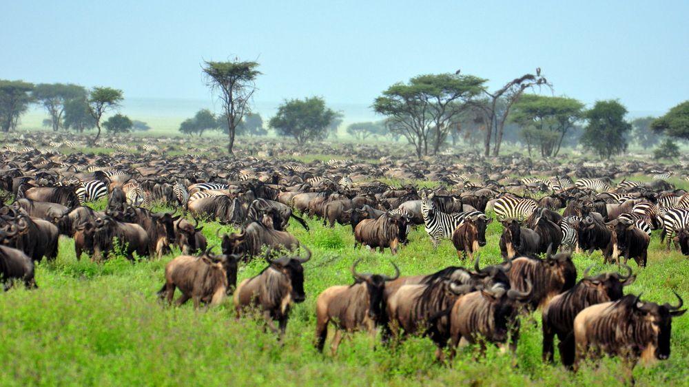 Serengeti Tanzania  city photos gallery : Park Narodowy Serengeti, Tanzania / fot. Shutterstock