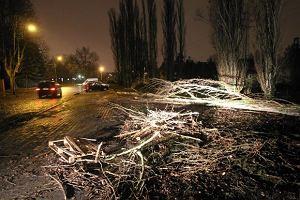 """Orkan """"Aleksandra"""" nad Polską: powalone drzewa, uszkodzone dachy"""