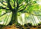Wycinka drzew. Nie rąb i nie pal