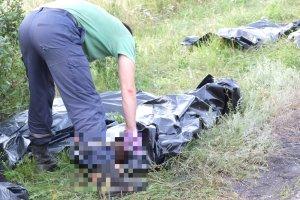 Cia�a ofiar zestrzelonego boeinga 777 s� wywo�one nie wiadomo dok�d [RELACJA I ZDJ�CIA Z MIEJSCA TRAGEDII]