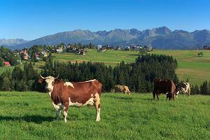Najlepszy produkt turystyczny POT: wakacje na wsi