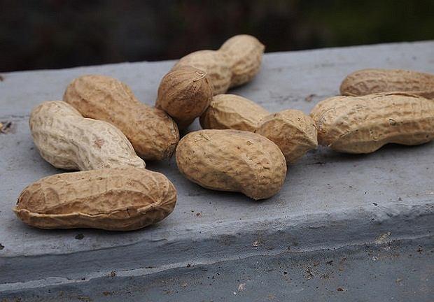 Orzechy ziemne to jeden z powszechniejszych alergenów