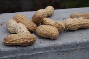 Nowa metoda walki z alergią. Naukowcy pozbyli się uczulenia na orzeszki