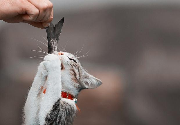 Ość może zrobić kotu dużą krzywdę
