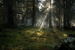 Jak przetrwać w mieście i w lesie? Przydatne rzeczy i pytania, na które warto znać odpowiedź