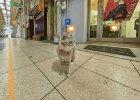 Takie rzeczy tylko w Japonii. Oto Hiroszima oczami... kota