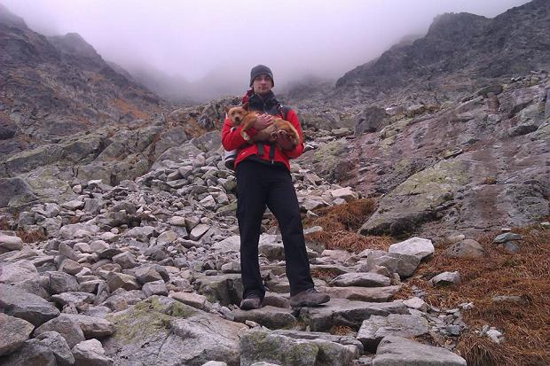 http://bi.gazeta.pl/im/84/76/e2/z14841476Q,Rysek--bezpanski-pies-znaleziony-w-wysokich-gorach.jpg