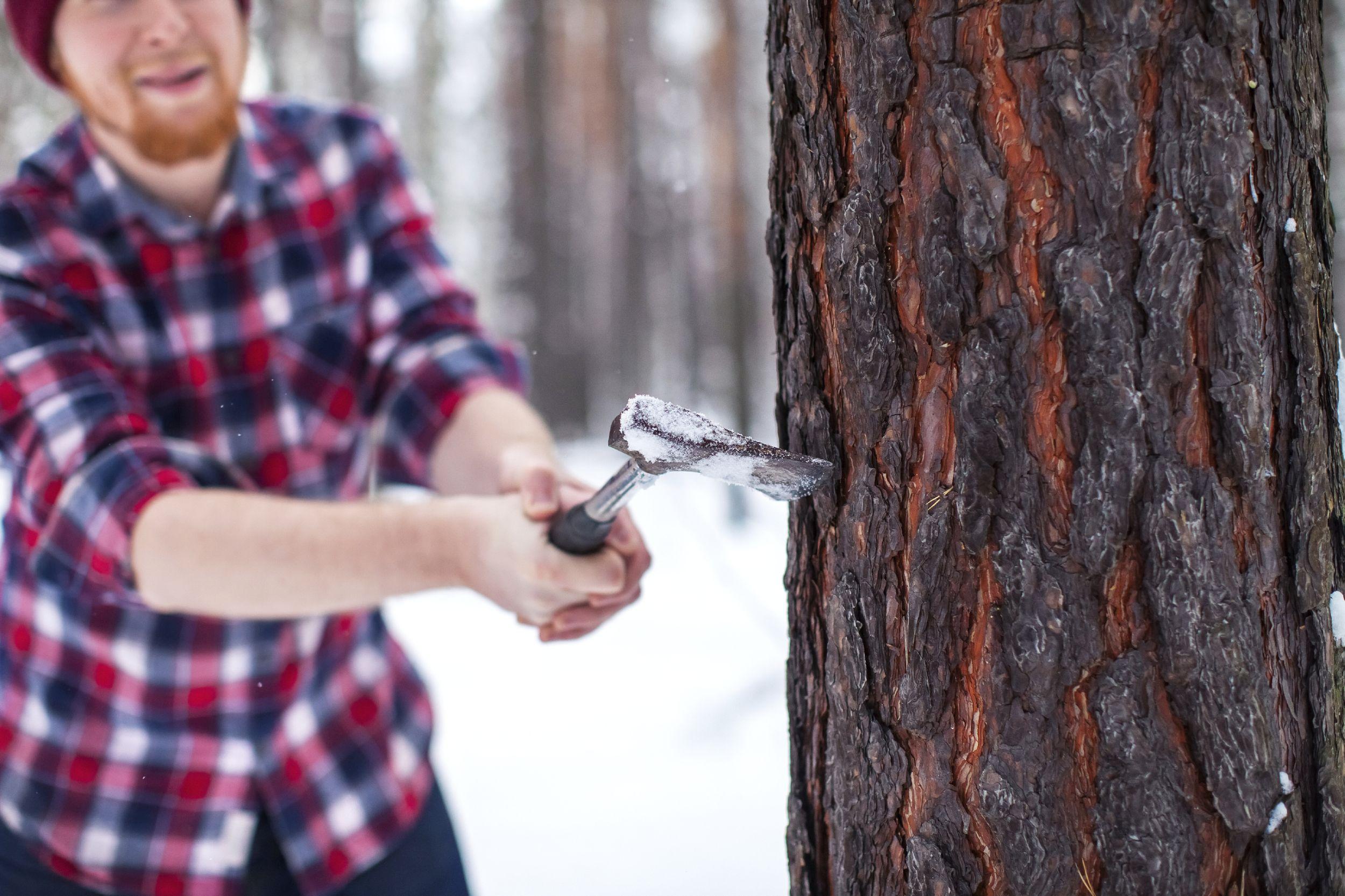 Dobry drwal zaczyna rąbać drewno, kiedy jest jeszcze zimno (fot. iStockphoto.com )