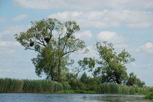 Tajemnicze zaginięcie gniazda bielików. Znikła jedna z atrakcji Międzyodrza [ZDJĘCIA]