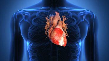 Za powstanie przewlekłego zespołu płucno-sercowego odpowiada nieprawidłowa wymiana gazowa w płucach oraz znaczne zmniejszenie powierzchni oddechowej płuc