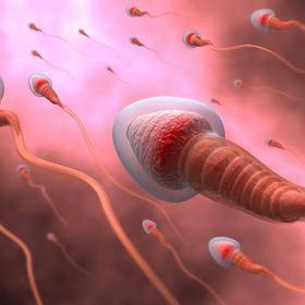 Badanie męskiego nasienia -