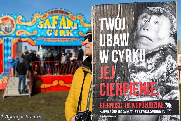 """Pracownicy cyrków donieśli kuratorium oświaty na fundację Viva z Rzeszowa. """"Prowadzą polityczną agitację w szkołach"""""""
