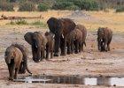 Chiny zacie�niaj� wi�zi handlowe z ma�� Tanzani�. P�ac� za to �yciem s�onie