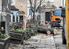 Polskie miasta coraz mniej zielone. Rośnie opór społeczny przeciw wycinkom drzew
