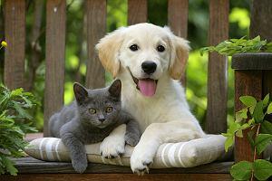 Pies i kot. Jak zadbać o swojego zwierzaka na wiosnę