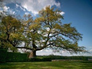 Drzewa polskie