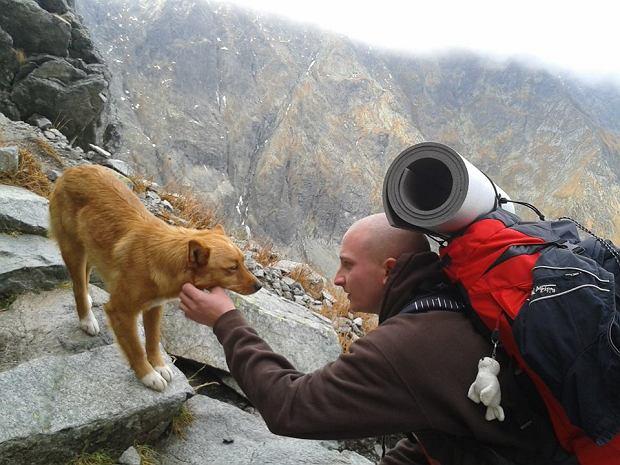 http://bi.gazeta.pl/im/86/76/e2/z14841478Q,Rysek--bezpanski-pies-znaleziony-w-wysokich-gorach.jpg