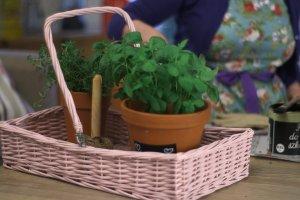 Ziołowy ogród rośnie w kuchni. Pomysł na wiosenne doniczki