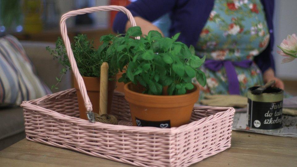 Ziołowy Ogród Rośnie W Kuchni Pomysł Na Wiosenne Doniczki