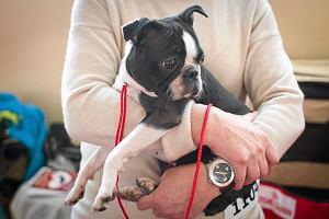 Jak dobrze przygarnąć psa? Poradnik adopcyjny [Część 3.]