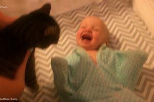 Słodkie koty kochają dzieci