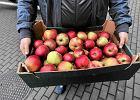 Jabłko - polski hit eksportowy będzie miał swój pomnik [oto projekt]