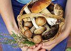 Jak zbierać grzyby. Zatrucia - objawy i pomoc