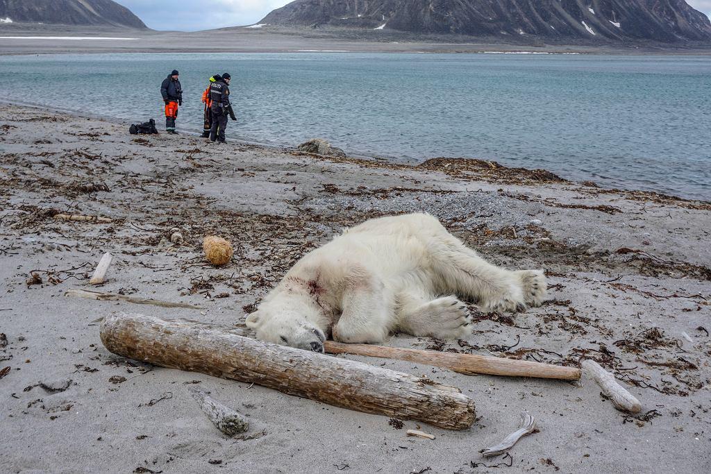 Niedźwiedź polarny zastrzelony przez załogę rejsu turystycznego
