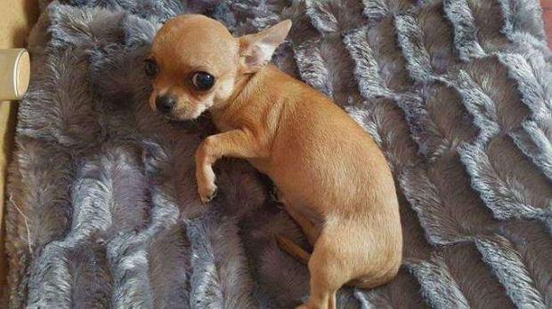 Mieszkanka Katowic za znalezienie psa oferuje samochód