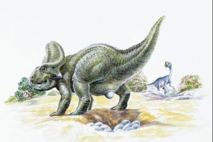 Gdzie s� dzieci dinozaur�w?