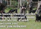 """Pies myśliwski może zagryźć dzika w ramach treningu? Aktywiści: """"To zorganizowana przestępczość pod egidą PZŁ"""""""