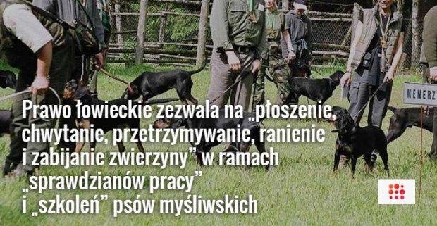 """Pies my�liwski mo�e zagry�� dzika w ramach treningu? Aktywi�ci: """"To zorganizowana przest�pczo�� pod egid� PZ�"""""""