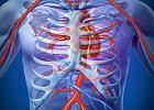 Aorta w obr�bie �uku