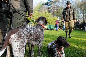 Obrońcy zwierząt przyjechali na zawody psów myśliwskich. Patrzymy myśliwym na ręce
