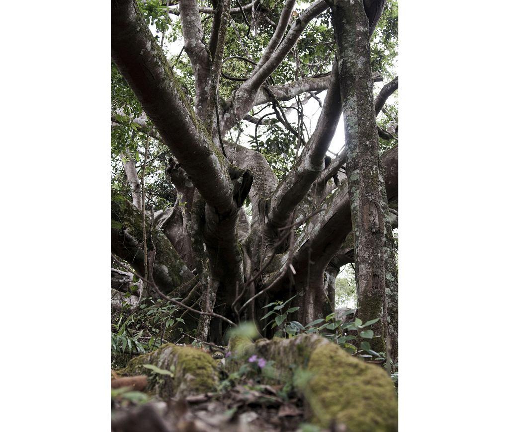 Mamut w Myanmar (fot. freistilchaot / iStockphoto.com)