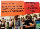 Protestowali na Rynku przeciwko wycince Puszczy Białowieskiej