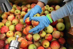 Finansowy trik Samcika: Jak tanio kupi� jab�ka?