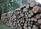 """Firmy z naszego regionu kupują drewno z Puszczy Białowieskiej. """"Jest tanie, robimy z niego palety"""""""