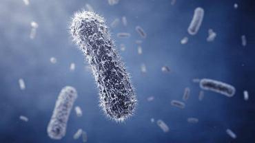Bakterie odpowiedzialne za rozwój choroby najczęściej trafiają do organizmu z zanieczyszczonego pożywienia