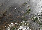 Unia karci za betonowanie małopolskich rzek. Grożą nam kary