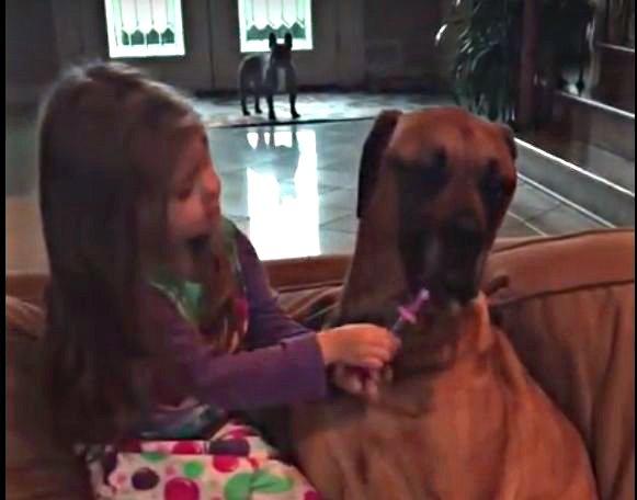 Ma�a dziewczynka bada psa