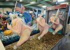 Podejrzany TTIP. Kto zarobi na wolnym handlu z Ameryk�