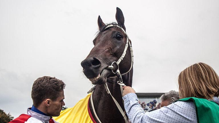 Koń Caccini