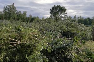 Białołęka. Zaczęła się wycinka 653 drzew. W zamian siedem nowych bloków