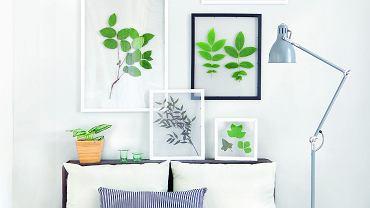 Zielnik na ścianie jest łatwy do wykonania samodzielnie. Wystarczy włożyć wybrane liście na ok. dwa tygodnie między dwie bibułki i przycisnąć czymś ciężkim. Następnie przykleić je do szyby ramki i gotowe.
