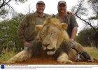 Zimbabwe chce ekstradycji zabójcy lwa Cecila. A Kenia szuka sprawców kolejnej krwawej zasadzki
