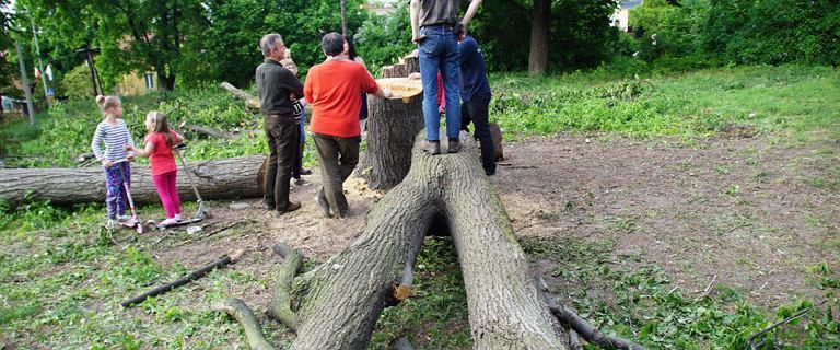 Mieszka�cy pilnuj� drzew, robi� obywatelskie patrole. Miasto zgodzi�o si� na wycink� pod apartamenty